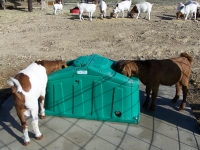Goats on Jugs Freezeguards 015.jpg