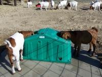 Goats on Jugs Freezeguards 015.jpg