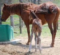 Horse Stables Colt.jpg