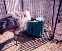 JUG EMU.JPG