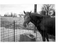 JUG HORSE.jpg
